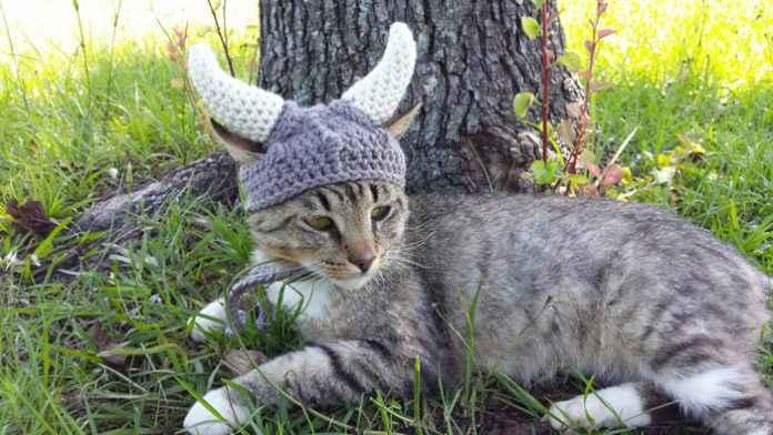 кошки завоевали мир